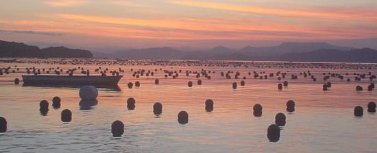 英虞湾夕日